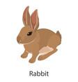 rabbit icon isometric style vector image