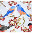 seamless texture birds bluebirds and bullfinch vector image