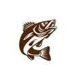 Walleye Fish Jumping Isolated Retro vector image vector image