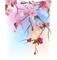 Background with gentle sakura branches vector image