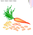 Carrot with Vitamin A K C and Minerals vector image vector image