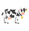 farm animal - cow vector image