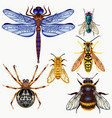 set of insects top view vector image