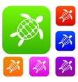 turtle set color collection vector image vector image