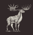 irish elk or giant deer or great horn prehistoric vector image vector image