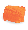 honey comb isolated vector image vector image