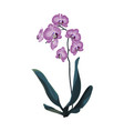orchid tropical flowers in watercolor style vector image vector image