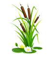 reed bush thicket plant vector image vector image