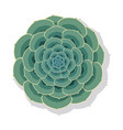 succulent plant vector image