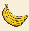 branch bananas yellow cartoon object vector image