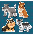 Different type of dogs vector image