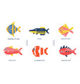 freshwater and ocean fishes collection angelfish vector image vector image