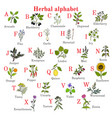 herbal alphabet herbs and plants collection vector image