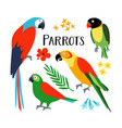 set tropical parrots with palm leaf and vector image