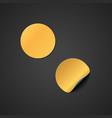 blank gold sticker mockup vector image