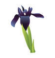 blue iris flower with green leafs on white vector image vector image