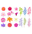 bright gorgeous flowers and wild useful herbs vector image vector image