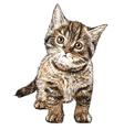 Cat 03 vector image vector image