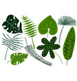 collection of tropical leaves exotic jungle palm vector image