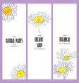 design template with flowers of daisy vector image vector image