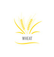 wheat seed food cereal brew agriculture wheat vector image vector image