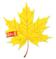 Autumn Sale Leaf vector image vector image