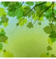 Fresh Green Leaves On Natural Background vector image
