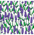 lavender drawing seamless pattern isolated vector image