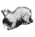 polar bear vintage vector image vector image