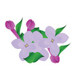 purple and violet lilac flowers with green leafs vector image vector image