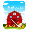 Chicken and red barn vector image