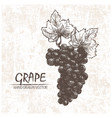 digital detailed grape hand drawn vector image vector image