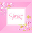soft flower spring background cherry blossom vector image