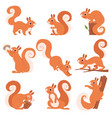 cartoon squirrel funny forest wild animals vector image vector image