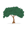 big tree drawing color vector image vector image