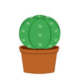 cactus isolated on white vector image vector image