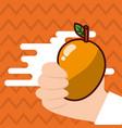 hand holding mango fresh colored background vector image