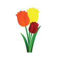 orange yellow and red tulips with green leafs on vector image