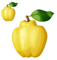 quince fruit cartoon icon isolated on vector image vector image