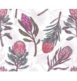 seamless pattern with sketch drawing protea vector image vector image