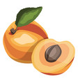 apricot with green leaf cartoon fruit on white vector image vector image