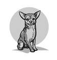 chihuahua a small dog vector image