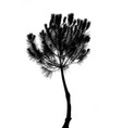 drawing of the tree on white background vector image vector image
