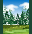 forest scene with pine trees vector image vector image