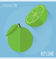 lime icon template vector image