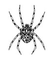 spider hand-drawn with ink vector image vector image