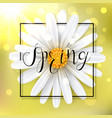 spring background with chamomile flower vector image vector image