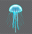 beautiful jellyfish isolated on dark vector image