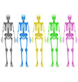 Coloured skeletons vector image vector image