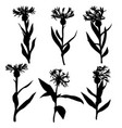 silhouettes of drawing cornflowers vector image